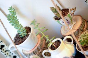 vintage servies cactus plant diy